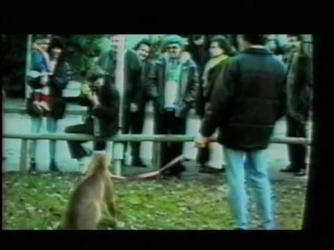 Pitura Freska – Papa Nero (Sanremo official videoclip)