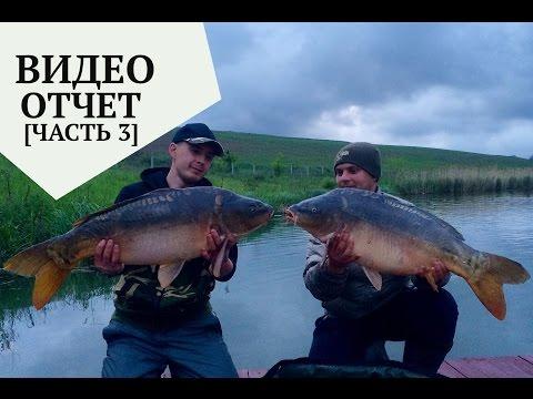 рыбалка на карпа на прудах видео бесплатно