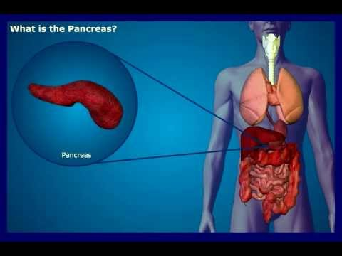 What is the Pancreas?