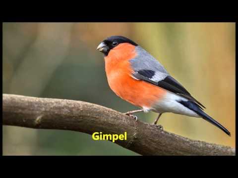 Unsere Singvögel