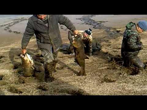 ловля судака в ростовской области видео