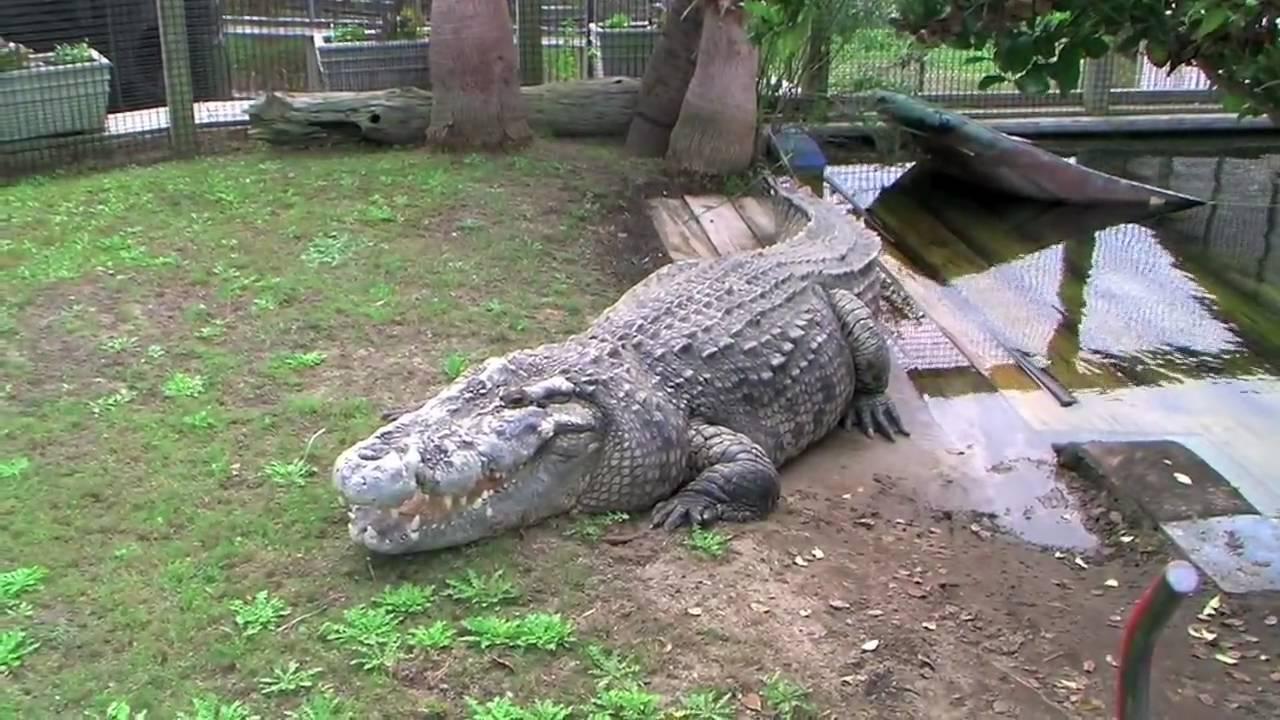 Crocodile Caught Myrtle Beach
