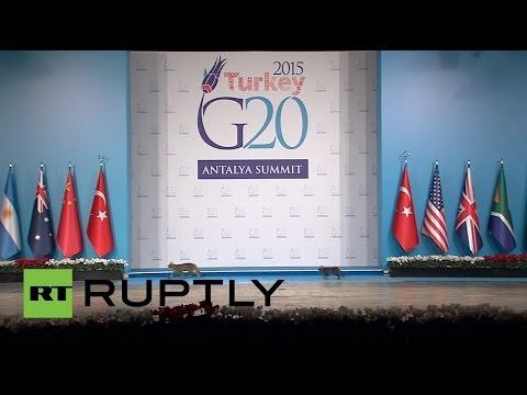 中央突破!?トルコで開催されたG20サミットでの厳重なセキュリティを突破した猫
