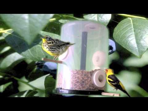Comederos y bebederos para aves pet alexander contreras for Bebederos para aves jardin