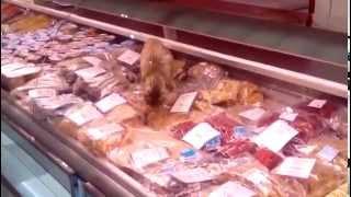陳列棚の魚介類を食い荒らす猫の画