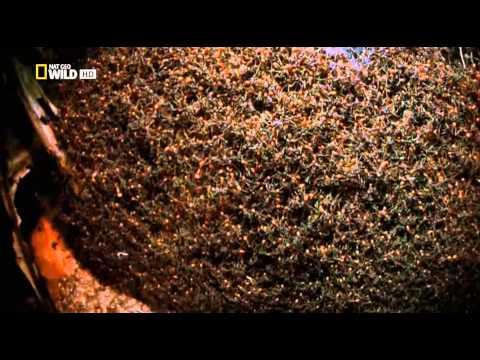 Город муравьёв (City of Ants)
