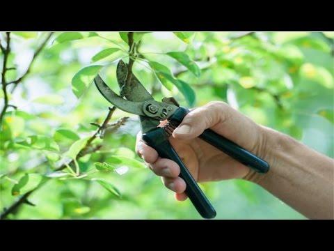 Clique e veja o vídeo Treinamento de Jardineiro - Poda de Árvores