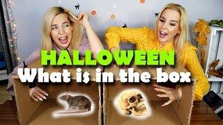 WHAT IS IN THE BOX CHALLENGE 😱👻 HALLOWEEN