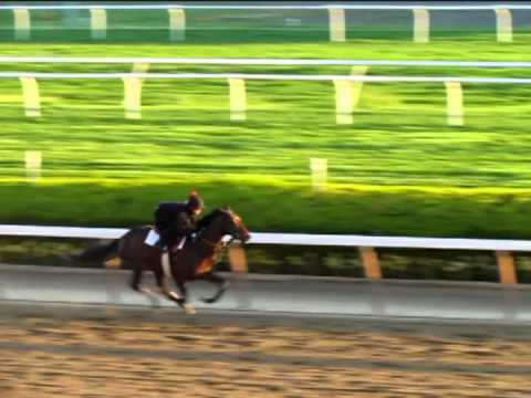 Orb breezes May 13 at Belmont Park for Preakness