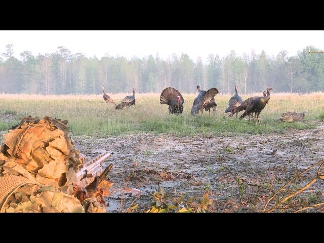 Turkey Hunting: In-Your-Face Osceola Gobblers