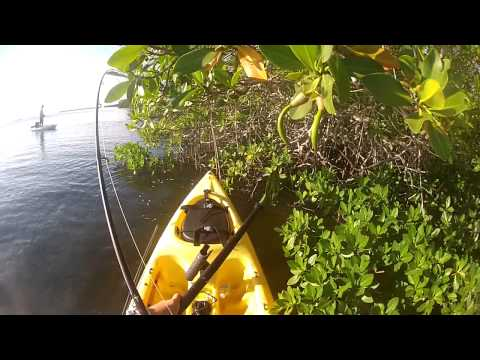 419 Fishing Mangrove Snapper on Topwater!  Florida Keys, Key Largo.  Sweet Video!