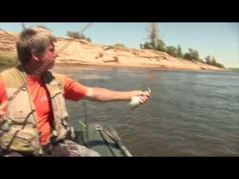ловля чехони на волге видео на резинку