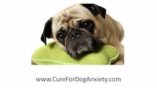 Separation Anxiety In Dogs, How To Cure Dog Separation Anxiety