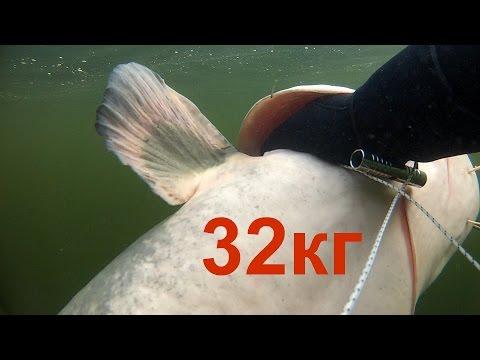 """Подводная охота""""искал судака,а нашел сома на 32кг""""spearfishing for catfish"""
