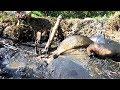 Bắt cá ruộng chị Hai quá đã | SBNN miền tây 250 thumbnail
