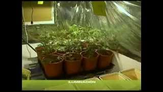 COME COLTIVARE INDOOR ¦ TUTORIAL ITA ¦ PARTE 2 ¦ KUSHWEED