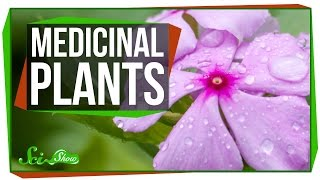 4 Plants That Are Great for Humans