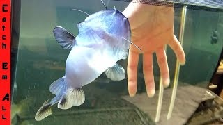 BLOB CATFISH Gets STUCK on FINGER!!