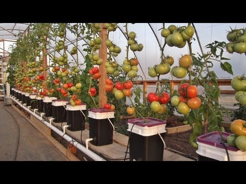 Dutch Bucket Hydroponics   Tips &amp  Expanding The Reservoir