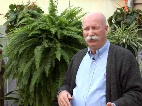Growing Indoor Ferns Youtube