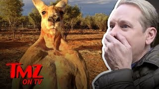 Roger The Kangaroo Has Passed | TMZ TV