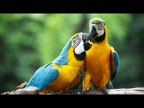 How to Take Care of a Macaw | Pet Bird