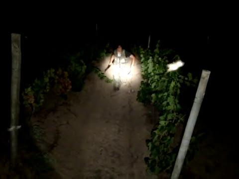 Caceria nocturna de liebre con escopeta maverik--