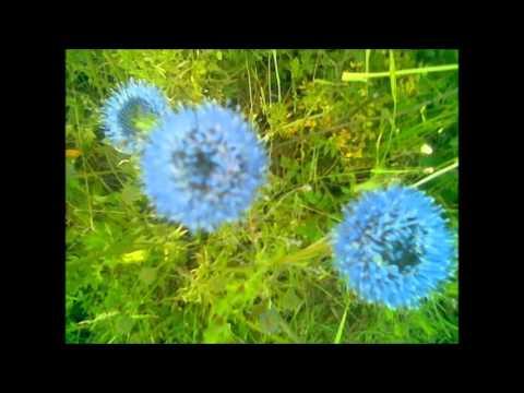 Niebiesko - Poezja śpiewana ( Milimetr )