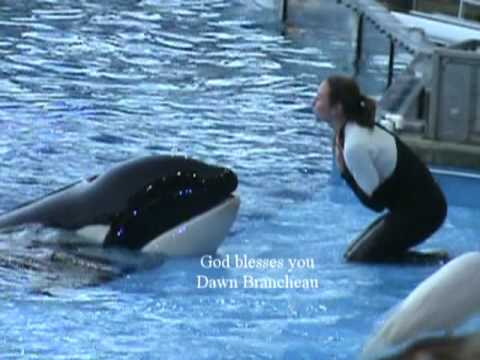 SEA WORLD trainer Dawn Brancheau