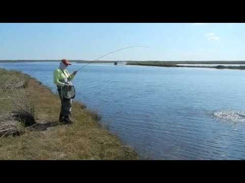 Fly Fishing for Shad on the St. Johns River