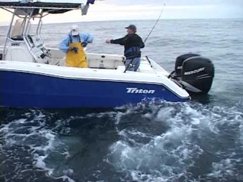 Shark fishing montauk ny monster blue shark preview for Montauk shark fishing