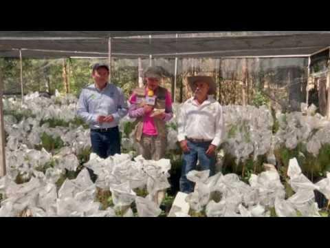 Veracruz Agropecuario - Especial Zacualpan