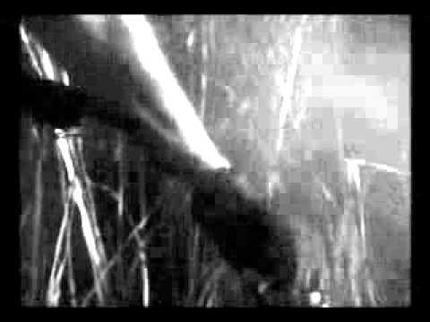 Sarcofago - Rhabdovirus   Pit bull curse - Resident evil.
