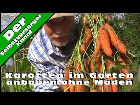 Karotten Im Selbstversorgergarten Anbauen Ohne Maden
