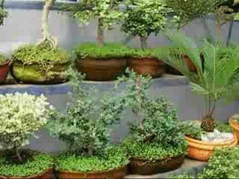 Mercado de plantas de xochimilco plants market youtube - Madreselva en maceta ...