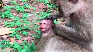 Big hit bit to baby Cry and run monkey Playing happy Angkor Daily 462