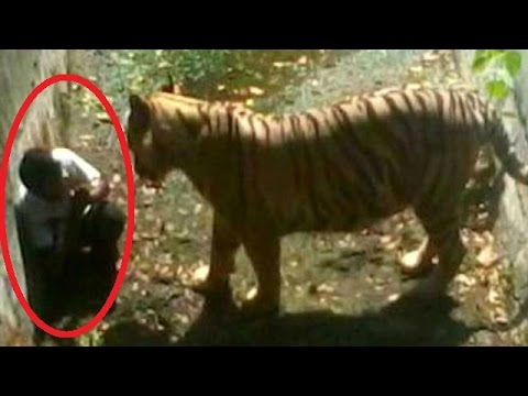 Delhi Zoo Shifts Blame? video