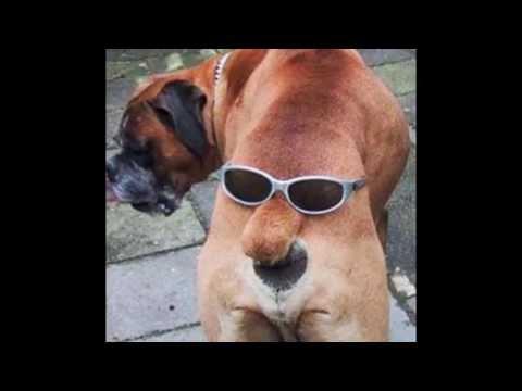 Fotos graciosas de animales y personas youtube - Animales con personas apareandose ...