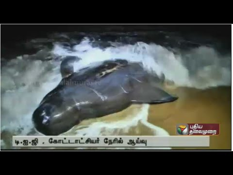 Dolphins washed ashore near Tiruchendur, Tuticorin district