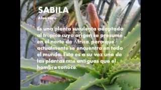 PLANTAS MEDICINALES VENEZUELA