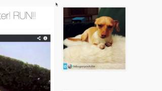 Tutorial | Embed a slide show of your instagram pictures using HTML!
