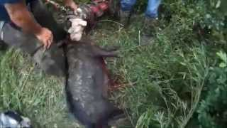 Hog Number 1 with Jimmy Spurlin - low resolution video