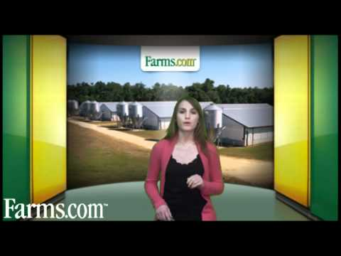 Farms.com Pork Commodity Market Price Report and Outlook