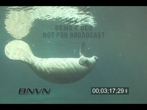 2/26/2007 Crystal River, FL Manatee swimming thru frame footage