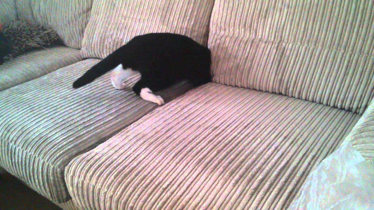 Poor Kitty, Sofa Got Him