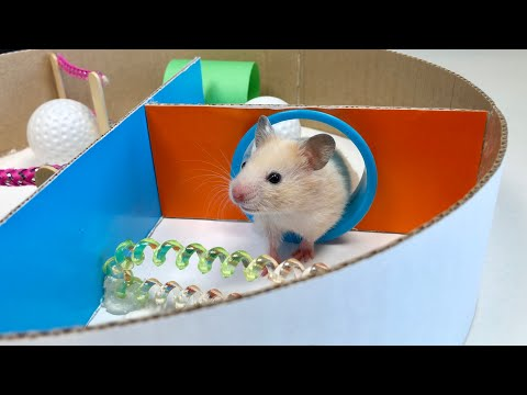 My Funny Pet Hamster in 6-Level Creative Maze