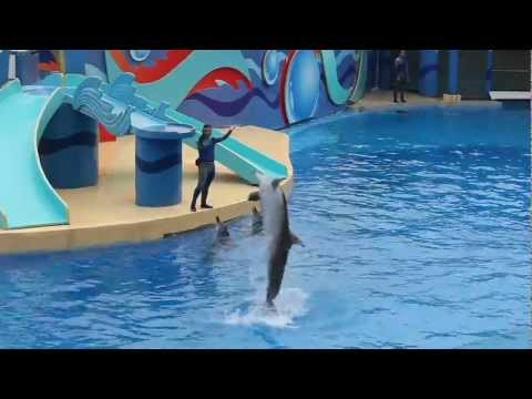 Ocean Park Hong Kong 香港海洋公園 6分半鐘 MV
