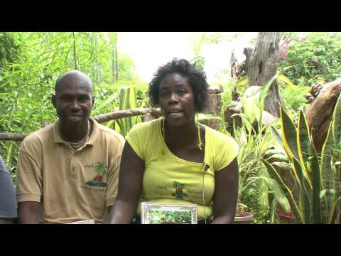I-TAL   A Jamaican Grass Roots Food Heritage