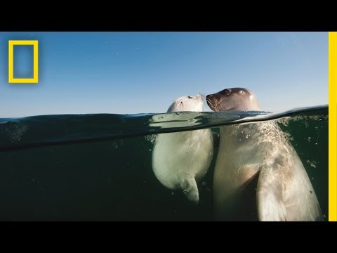 National Geographic Live! - David Doubilet & Jennifer Hayes: From Islands to Ice