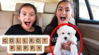 I'll buy Whatever you Spell Challenge - Collecting New Puppy🐶